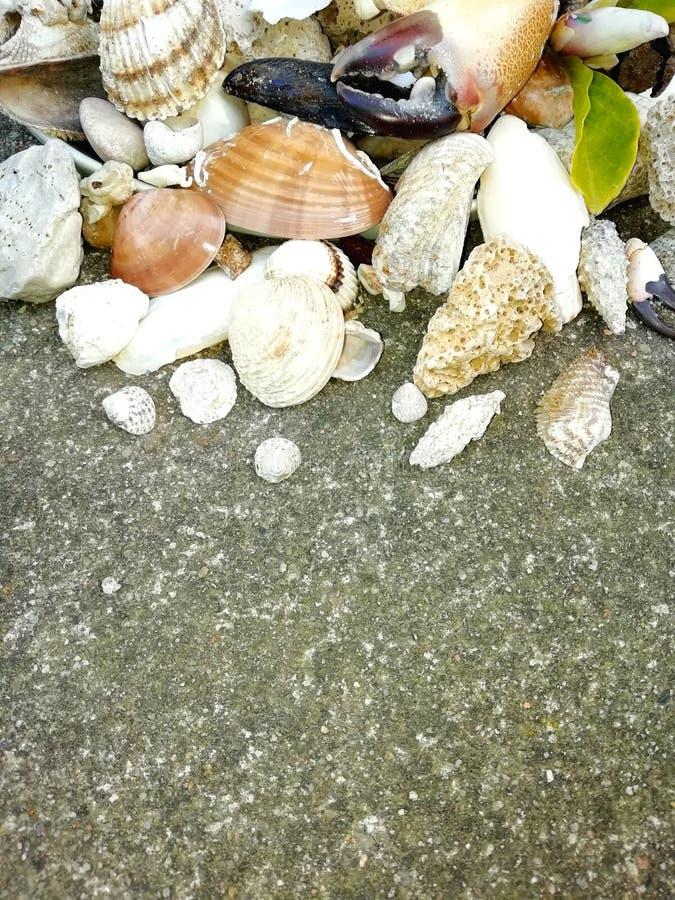 贝壳和石头在地面上,夏天海滩,爪,叶子,关闭照片 免版税库存图片