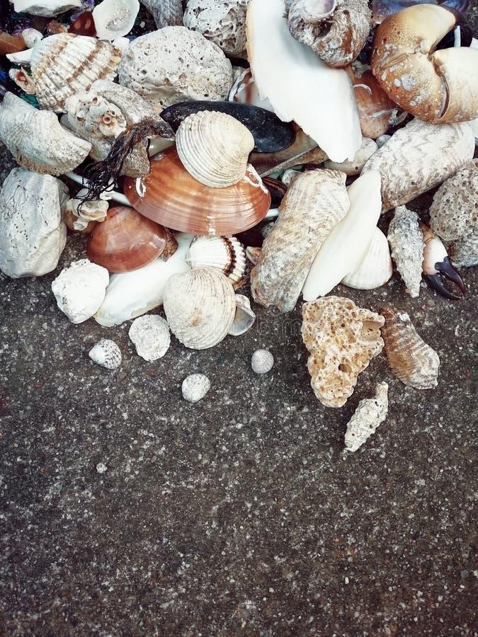 贝壳和石头在地面上,夏天海滩,爪,叶子,关闭照片 免版税库存照片