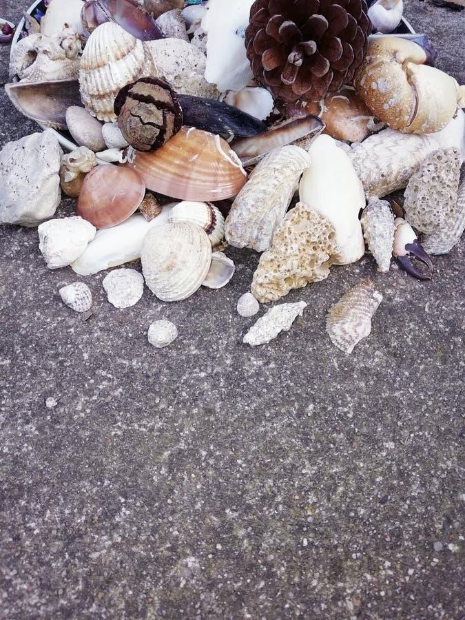 贝壳和石头在地面上,夏天海滩,爪,叶子,关闭照片 图库摄影