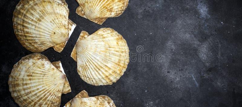 贝壳在黑暗的石背景的海洋壳 贝壳海洋壳纹理  r 免版税库存图片