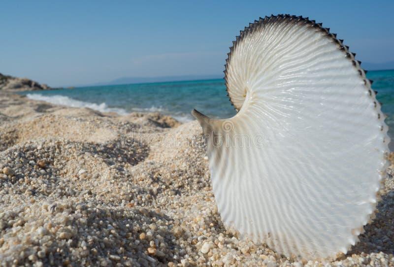 贝壳海滩海 免版税图库摄影