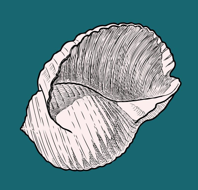 贝壳的传染媒介图画 皇族释放例证