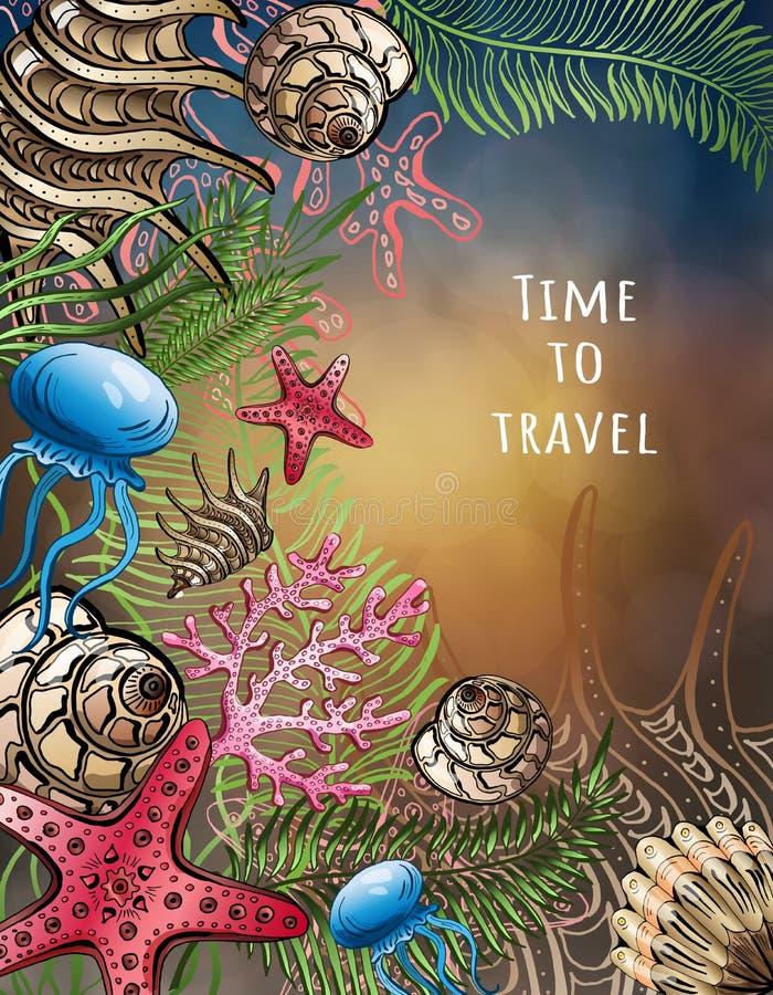 贝壳,海星,水母的构成 gili印度尼西亚海岛在海龟水下的世界附近的lombok meno 背景峡湾光芒海运星期日 也corel凹道例证向量 向量例证