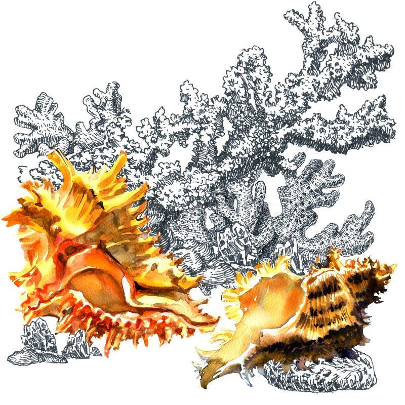 贝壳,珊瑚 葡萄酒海洋海洋生活构成 手拉的水彩例证,白色背景 艺术设计 向量例证