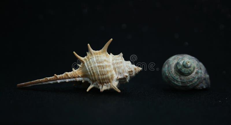 贝壳15 免版税库存图片