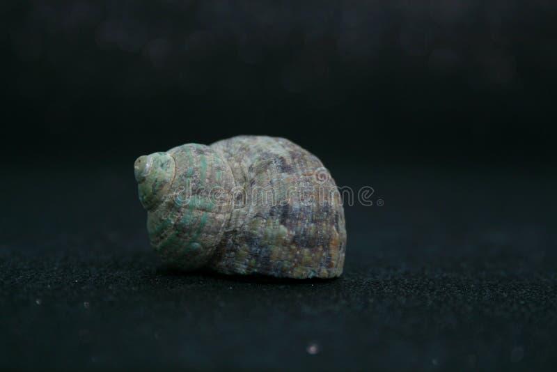 贝壳17 免版税库存照片