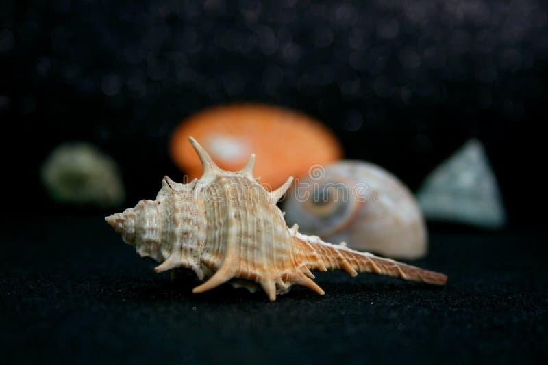 贝壳20 库存照片