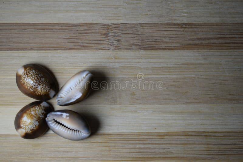 贝壳 图库摄影