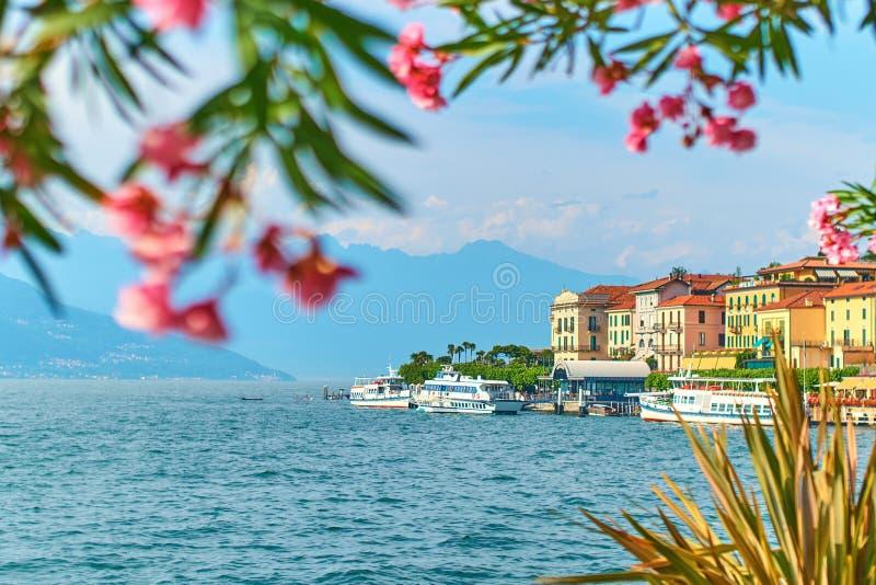贝拉焦镇美好的晴朗的夏天视图湖的科莫在有开花的夹竹桃夹竹桃的意大利开花,船和 免版税库存图片
