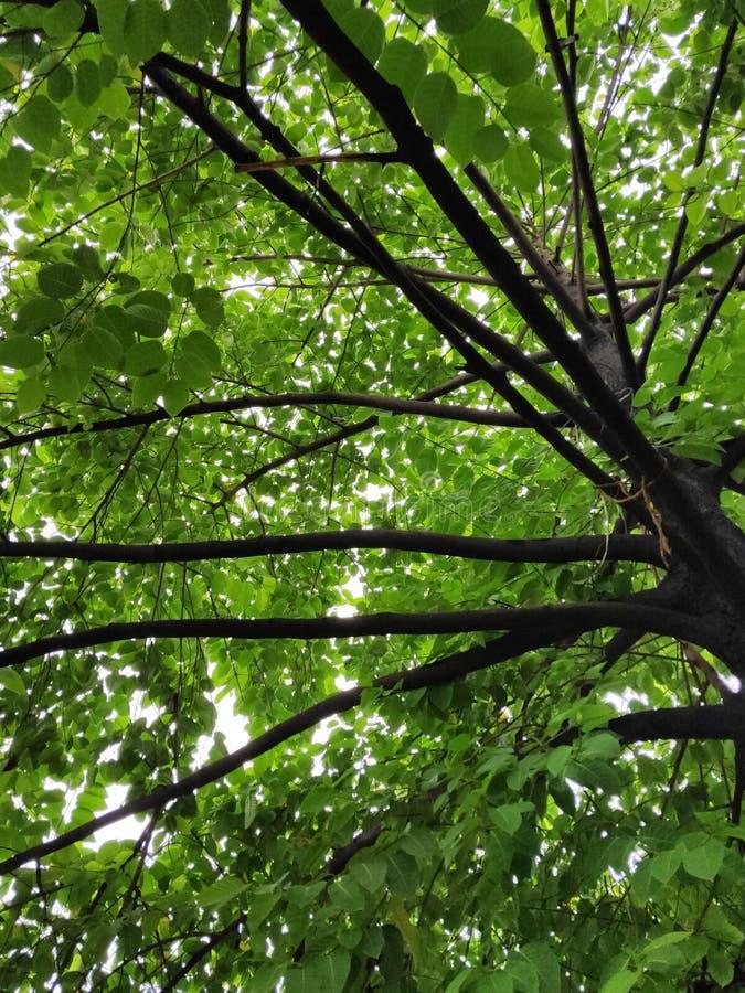 负担叶子的树树干 免版税库存图片