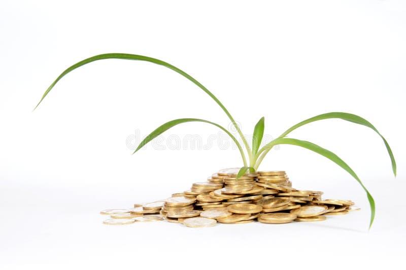财务的肥料 免版税库存图片
