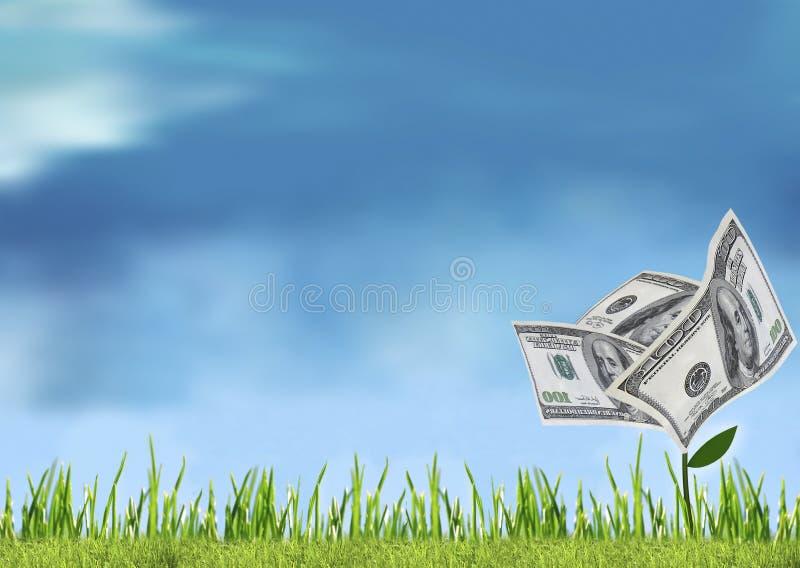 货币发芽 库存照片