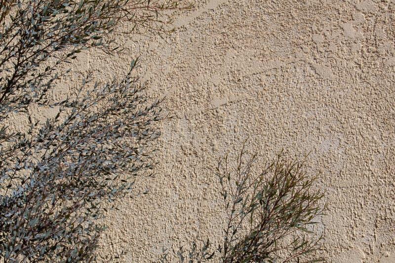 质感粗糙的灰泥墙壁背景有玉树的离开前景 免版税库存照片