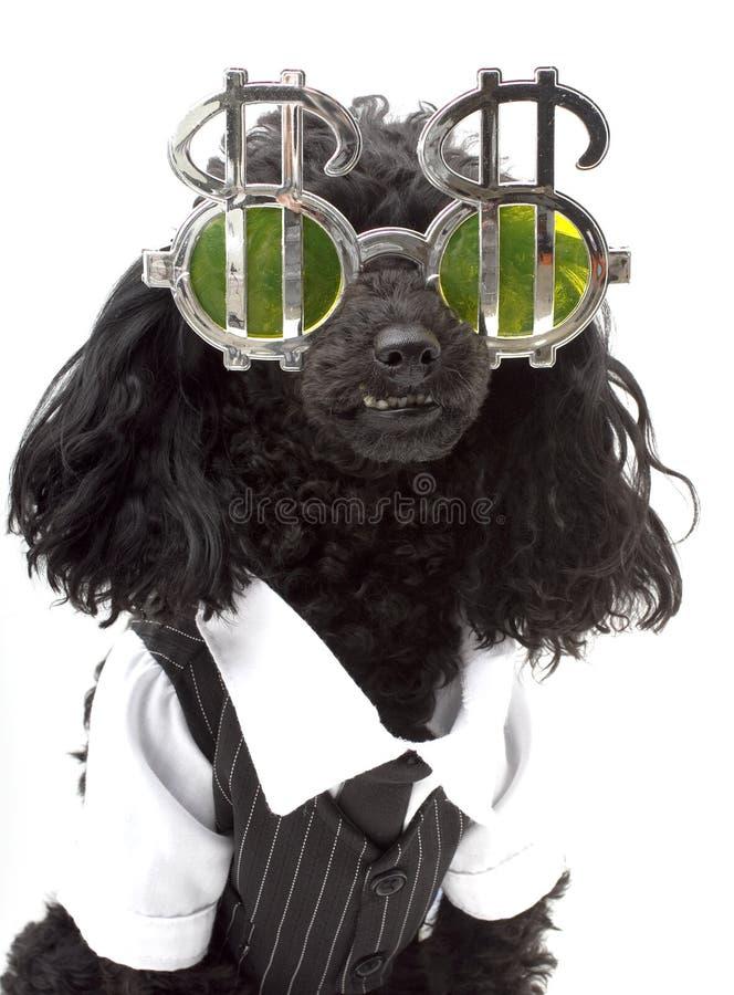 贪婪的狗 库存图片