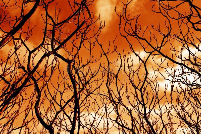 贫瘠分行不祥的结构树 免版税库存图片