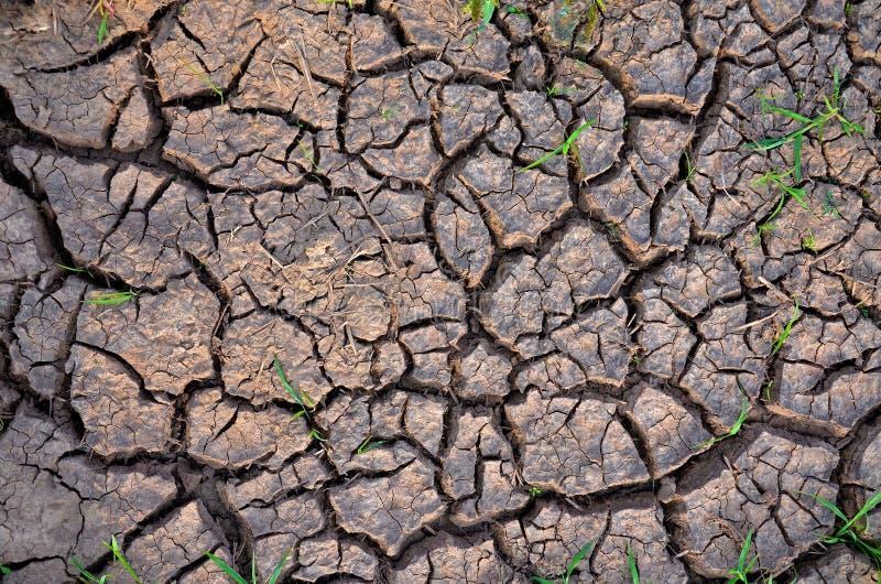 贫瘠地球 背景破裂的干燥地球 破裂的泥模式 在镇压的土壤 有裂缝的纹理 天旱土地 环境天旱 图库摄影