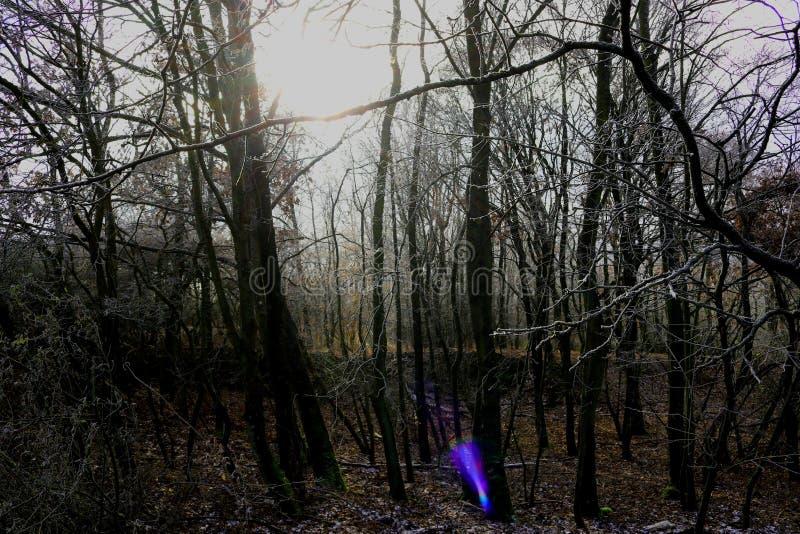 贫瘠树和下木在冬天 免版税库存图片
