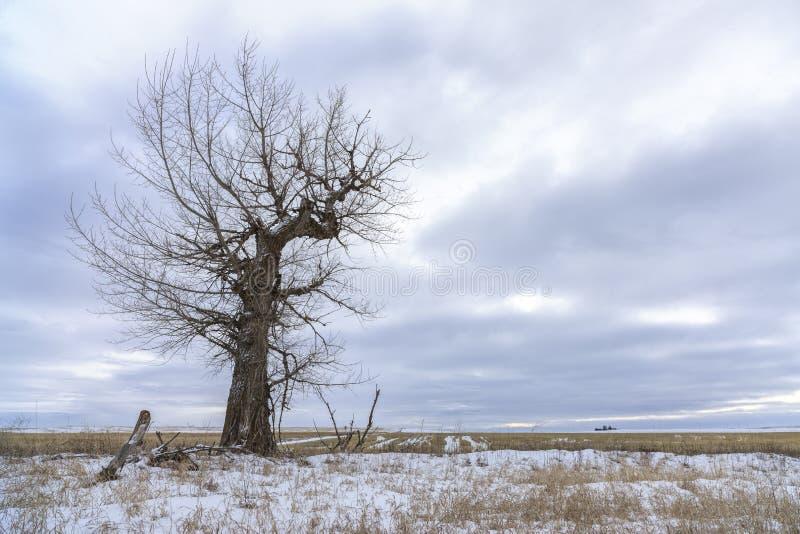 贫瘠树在冬天在多云天空下 库存照片