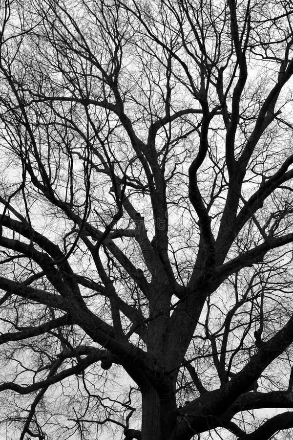 贫瘠树在冬天 免版税库存照片