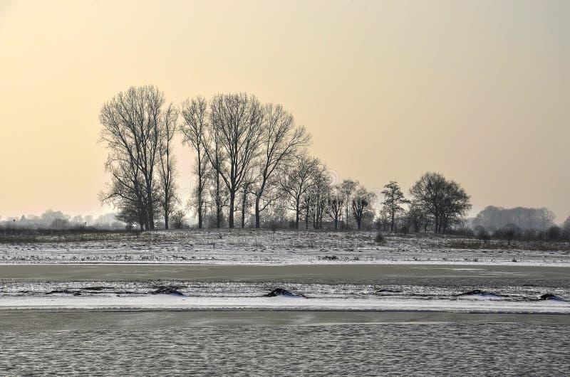 贫瘠树在洪泛区在冬天 图库摄影