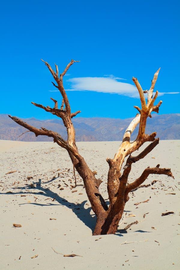 贫瘠结构树 库存图片