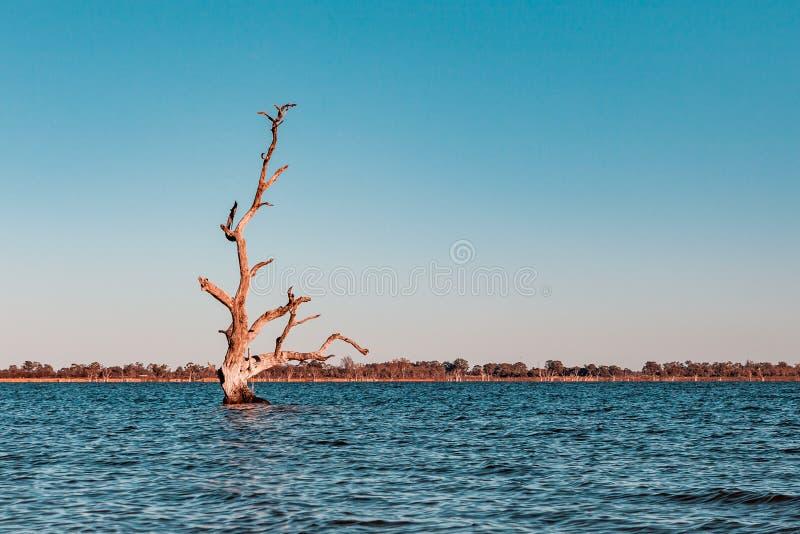 贫瘠treesgrowing在水中 库存图片