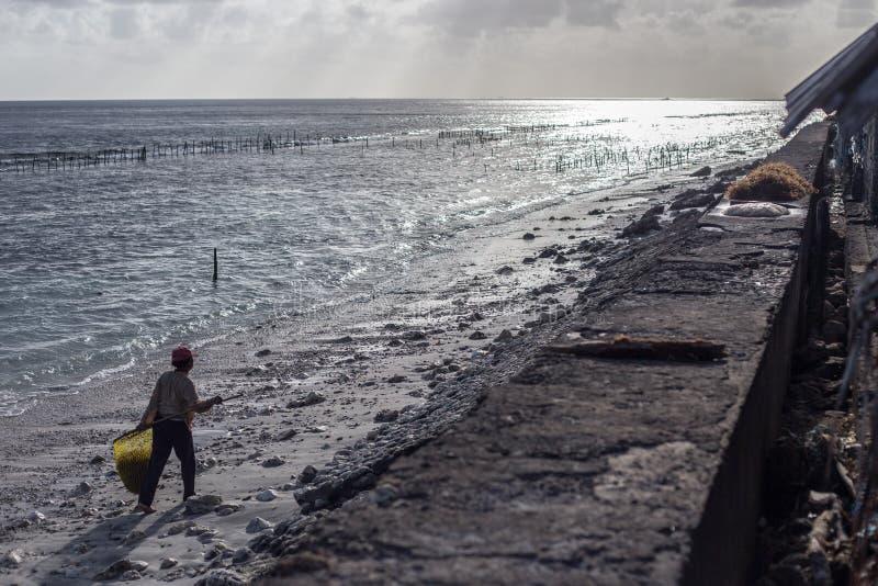 贫穷村庄妇女拾起沿海滩的海草 免版税库存图片