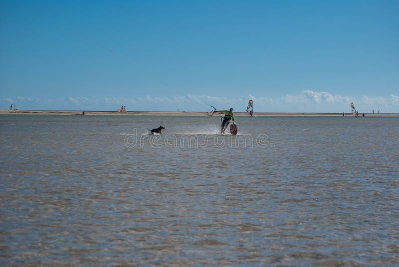 费埃特文图拉岛、风筝冲浪者和狗 库存照片