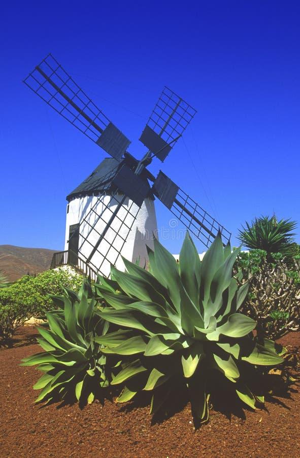 费埃特文图拉岛西班牙 库存照片