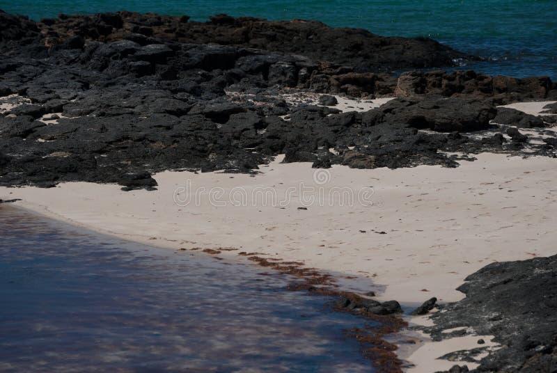 费埃特文图拉岛,白色沙子,黑岩石 库存图片