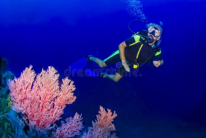 资深妇女佩戴水肺的潜水 库存图片