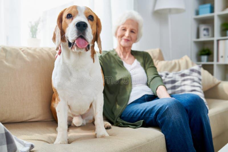资深妇女和她的狗在家 免版税库存照片