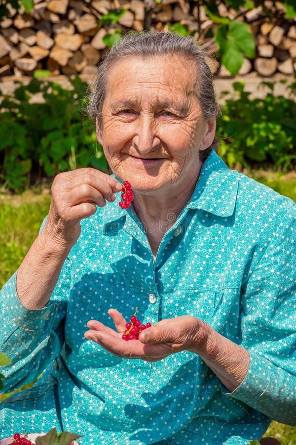 资深妇女在她的庭院和本地出产的红醋栗里 免版税库存照片