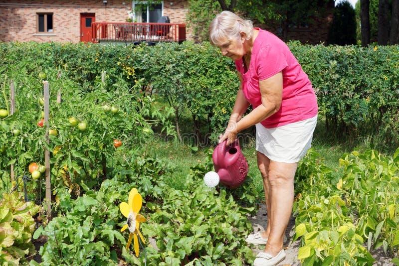 资深妇女浇灌的庭院 库存图片