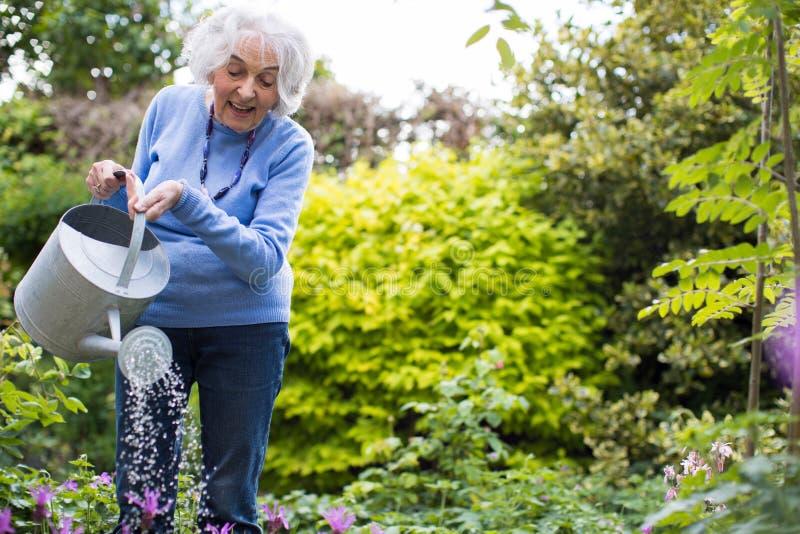 资深妇女浇灌的花在庭院里 库存照片