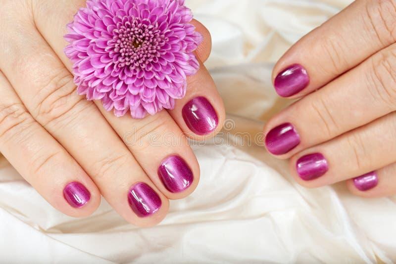 资深妇女的年龄修指甲 有桃红色钉子的手 库存照片