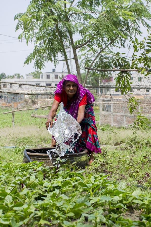 资深孟加拉国的妇女浇灌的菜植物用在手上在达卡,孟加拉国 图库摄影