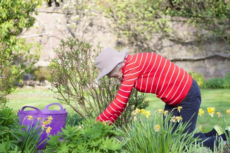 资深年长人活跃生活方式在明亮的五颜六色的春天阳光和夏天温度期间的庭院里 免版税库存照片