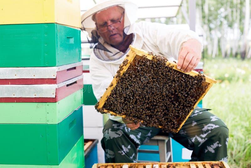 资深蜂农在工作 库存图片