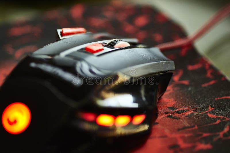 赌博老鼠2 库存图片
