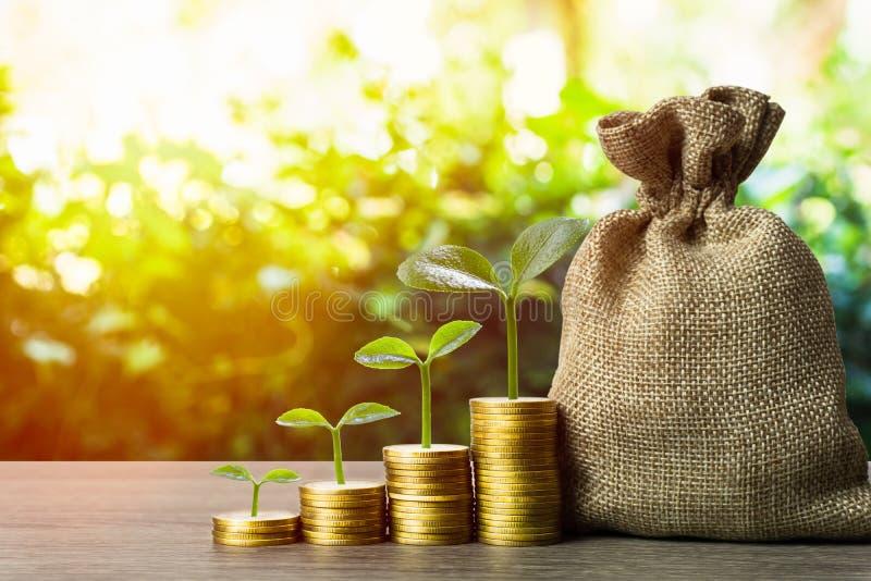 赚钱和投资,储蓄概念 一种植物,生长在一堆堆金币上 库存照片