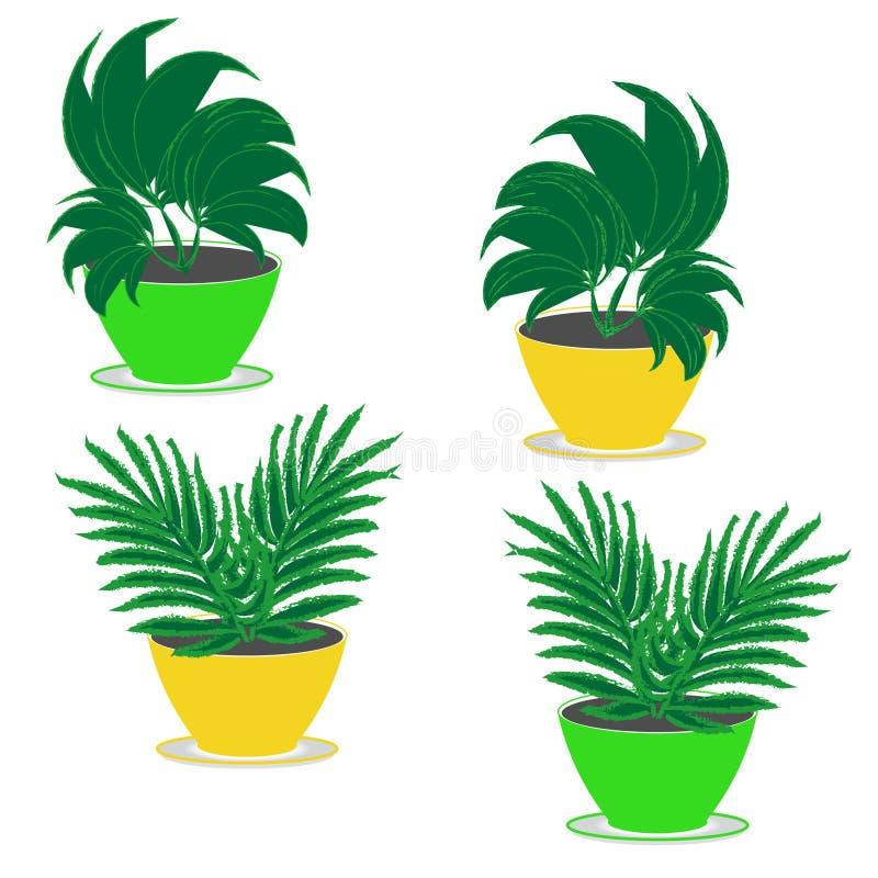 赛斯有茂盛植物的四个室内花园园林植物在花盆绿色和黄色在白色背景 免版税库存照片