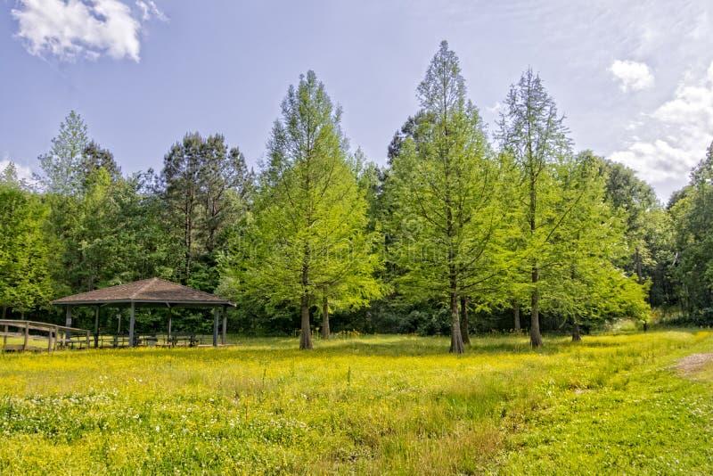 赛普里斯树丛和野花图片
