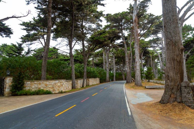 赛普里斯森林树丛 图库摄影