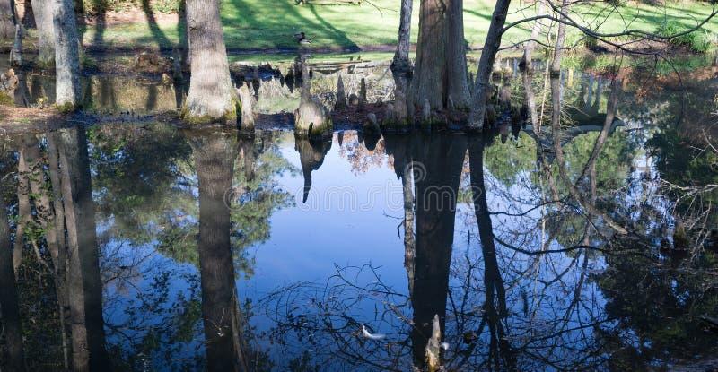 赛普里斯沼泽反射在南卡罗来纳,美国 库存图片