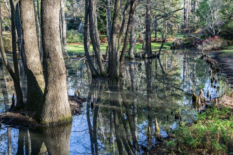 赛普里斯沼泽反射在南卡罗来纳,美国 免版税库存图片