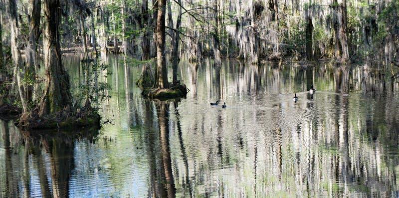 赛普里斯沼泽在南卡罗来纳,美国 免版税库存照片