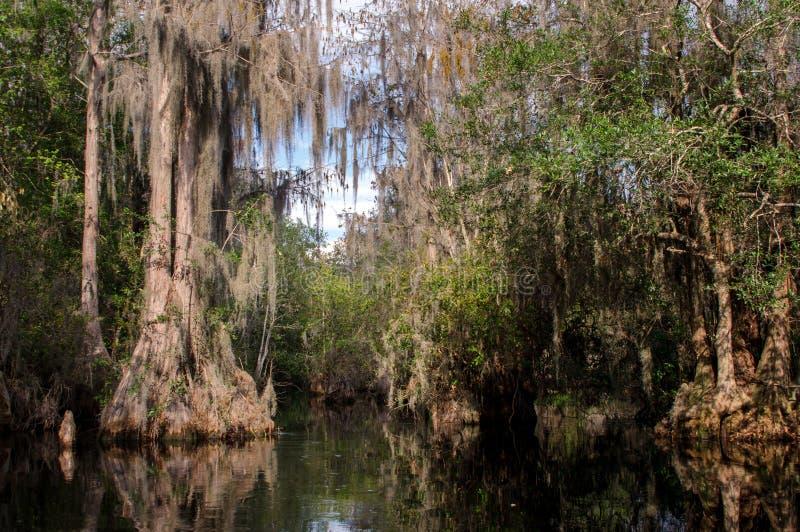 赛普里斯沼泽,寄生藤, Okefenokee沼泽全国野生生物保护区 免版税库存图片