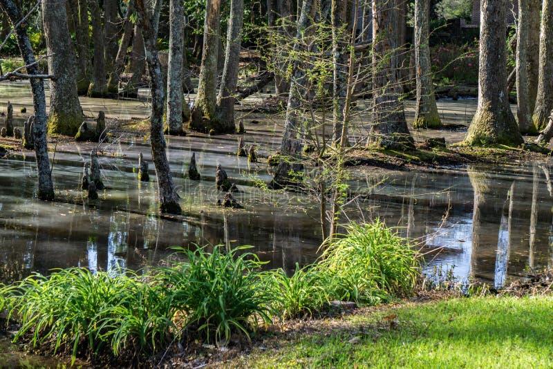 赛普里斯头沼泽在南卡罗来纳,美国 图库摄影
