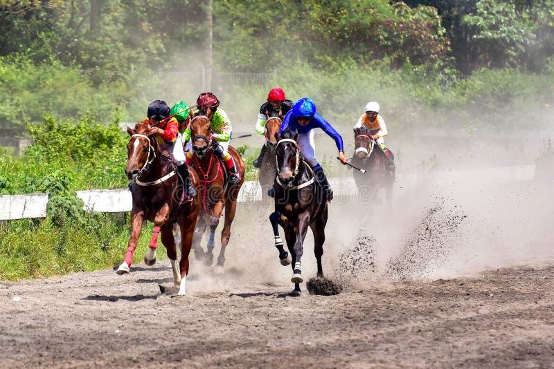 赛跑俄国的高加索竞技场马北pyatigorsk 库存照片